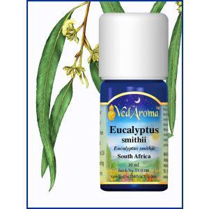 Eucalyptus Smithii 10 ML
